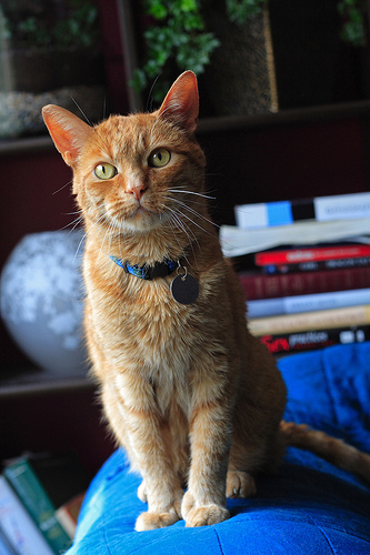 How To Always Get Your Lost Pet Home Safely Kitty Love